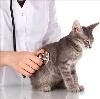 Ветеринарные клиники в Вичуге